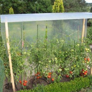 toit tomates parapluie la boutique du jardinage. Black Bedroom Furniture Sets. Home Design Ideas