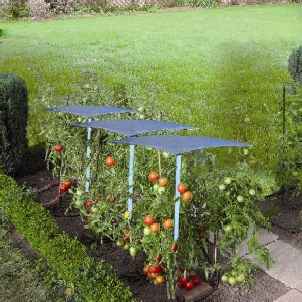 Toit tomates parapluie la boutique du jardinage - Protection toit abri de jardin ...